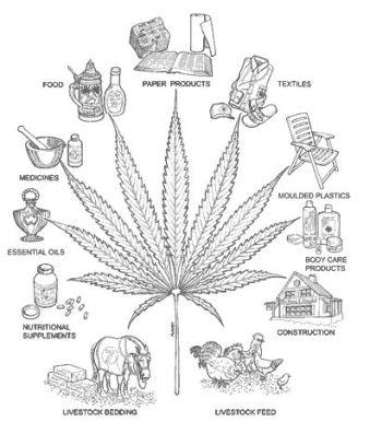 Major uses of industrial hemp